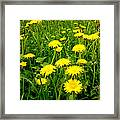 Colours Of Spring Framed Print