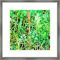 Common Horsetail (equisetum Arvense) Framed Print