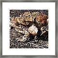 Common Toads Framed Print