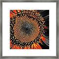 Coneflower Heart Framed Print