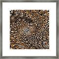 Copper Head Framed Print