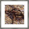 Coral Beach Treasure  Framed Print