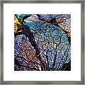 Coral Beached Framed Print