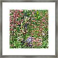 Coral Bells And Irises Framed Print