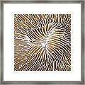 Coral Closeup Framed Print