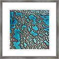 Coral On Hardy Reef Australia Framed Print