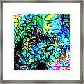 Coral Reef Beauty Framed Print