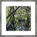 Corkscrew Swamp 3 Framed Print