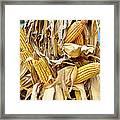 Corn Shock - Sign Of Autumn Framed Print