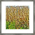 Cornfield Framed Print by Baywest Imaging