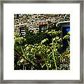 Cornish Cow Parsley  Framed Print