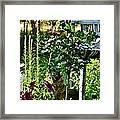 Cottage Bird Garden Framed Print