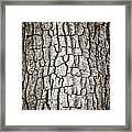 Cottonwood Bark 1 Framed Print