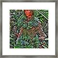 Could Her Name Be Ivy... Buffalo Botanical Gardens Series Framed Print