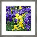 Country Road Irises  Framed Print