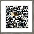 Cows Collage Framed Print