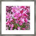 Crab Apple Blossoms Framed Print