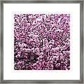 Crab Apple Tree Framed Print