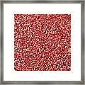 Cranberry Harvest 3 Framed Print