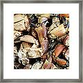 Crayfish Framed Print