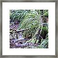 Creek Running Through The Forest Framed Print