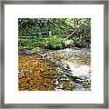Creekside 4 Framed Print