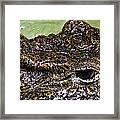 Crocodile Eye Framed Print