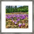 Crocus Flower Valley Framed Print