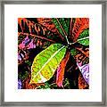 Croton Framed Print