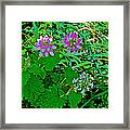 Crown Vetch And Catnip In Pipestone National Monument-minnesota Framed Print