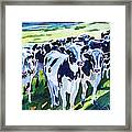 Curiosity Cows Original Sold Prints Available Framed Print