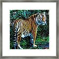 Curious Kitty Framed Print