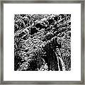 Cycads At Cliffs' Edge Black And White Framed Print
