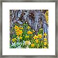 Daffodils And Sculpture Framed Print