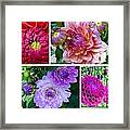 Dahlia Best Collage Framed Print
