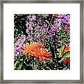Dahlias And Asters Framed Print