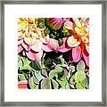 Dahlias And Hydrangeas Bouquet Framed Print
