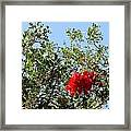 Daily Cycle 2 - Noon Framed Print