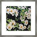 Daises Two Framed Print