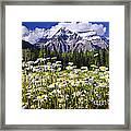 Daisies At Mount Robson Framed Print by Elena Elisseeva