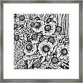 Daisies In Relief Framed Print