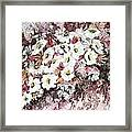 Daisy Blush Remix Framed Print