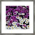 Daisy Bouquet From Dublin  Framed Print