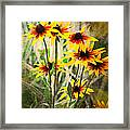 Daisy Do Framed Print