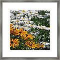 Daisy Fields Framed Print