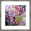 Daisy Mix   Sold Framed Print