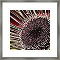 Daisy Unleashed Framed Print