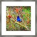 Dance Of Blue Jay Framed Print