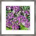 Dance Of Flowers Framed Print