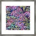Dancing Coneflowers Framed Print